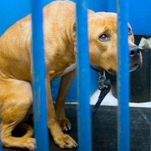 Abandono e mau trato de animais não é punido criminalmente ou de forma adequada